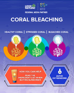 Infographics_coral